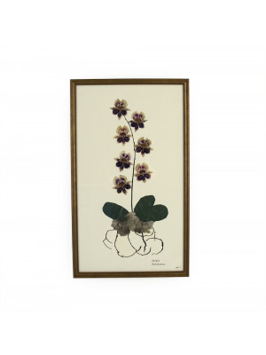 Purple Orchid Wall Art Print