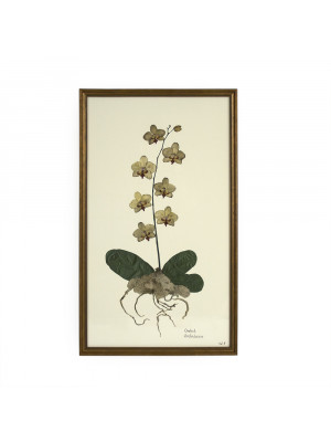 White Orchid Wall Art Print