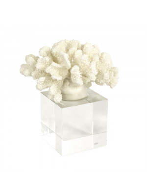 White Coral on Acrylic Stand